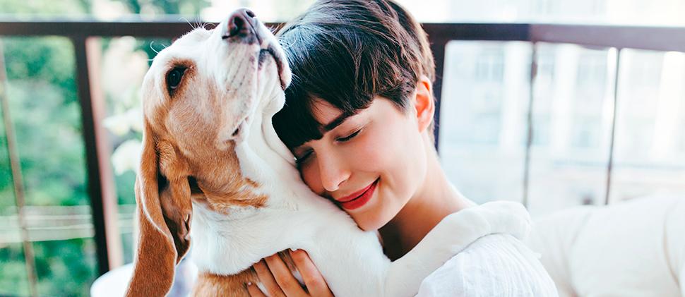 Mascotas: ¡cuida su pelaje!