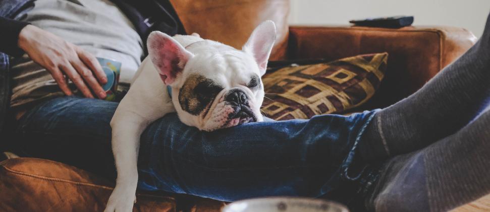 ¿Tienes mascotas y te preocupa cómo puede comportarse el COVID-19 en ellos?