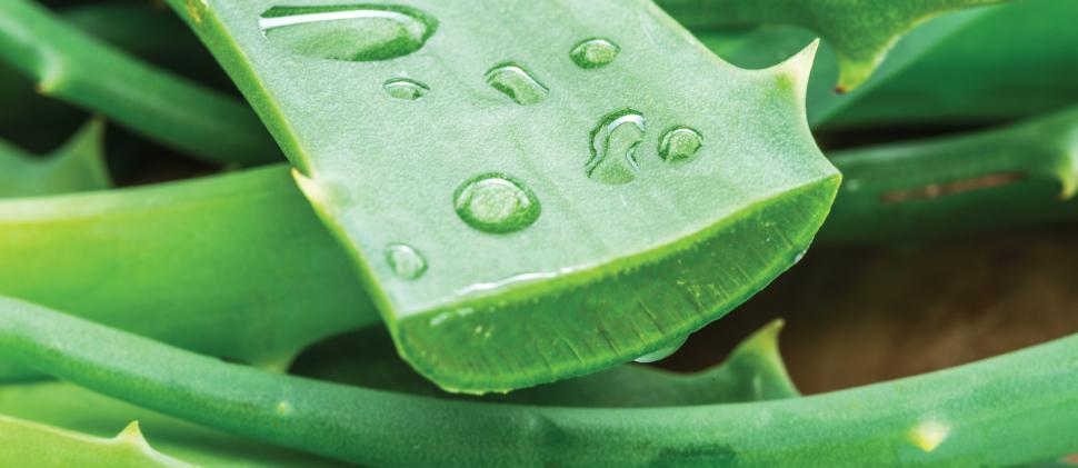 ¡Protege tu piel del sol con lo mejor del Aloe Vera!