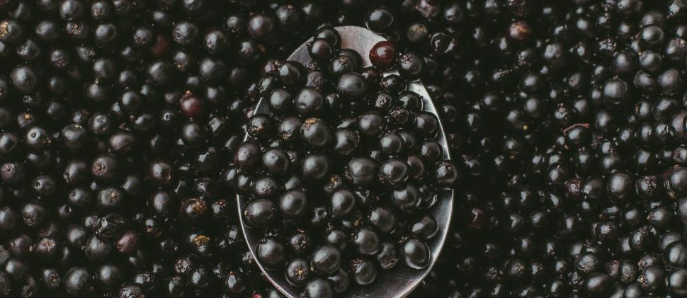 Bayas de Sauco ¡Conoce su poder antioxidante e inmunológico!