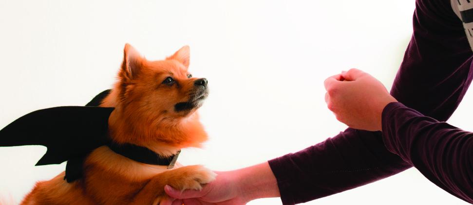 Mascotas, aliadas contra la depresión