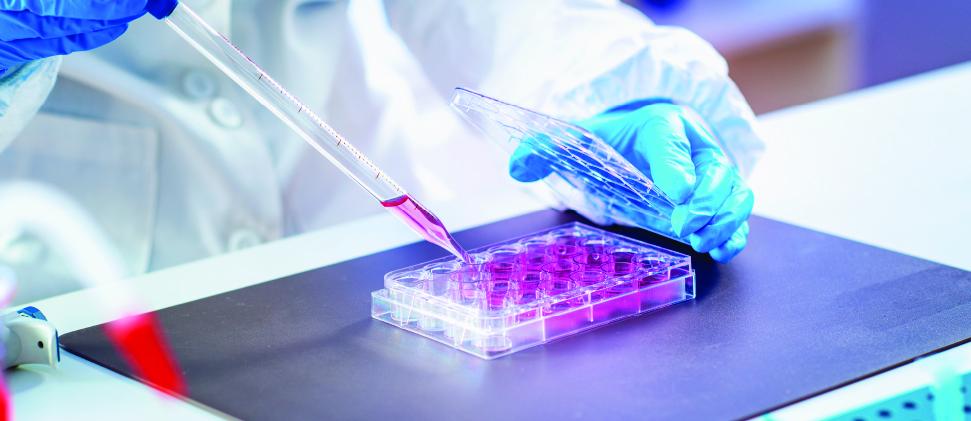 Células madre sanguíneas:  Segunda oportunidad de vida